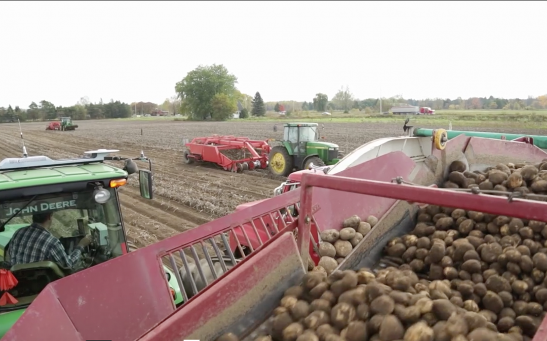 Educational Video Series – Sunrise Potato Farm